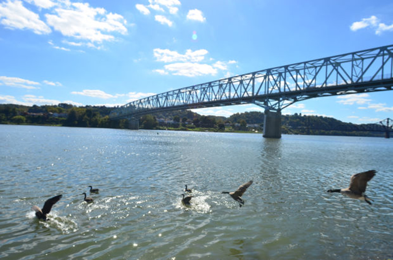 ohio-river-geese-times.jpg
